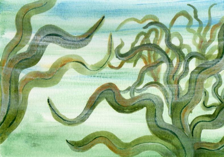 las-algas-en-sicixia-internet